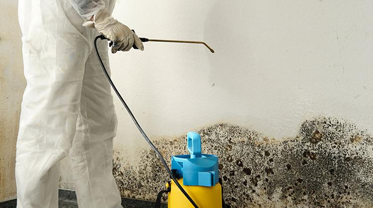 Comment arrêter la moisissure sur les murs
