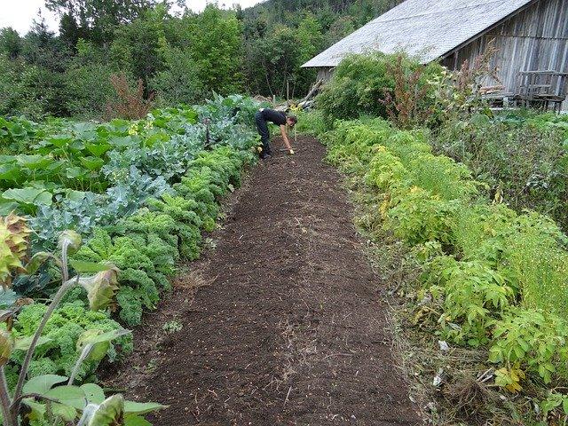 Préserver la terre dans son jardin potager