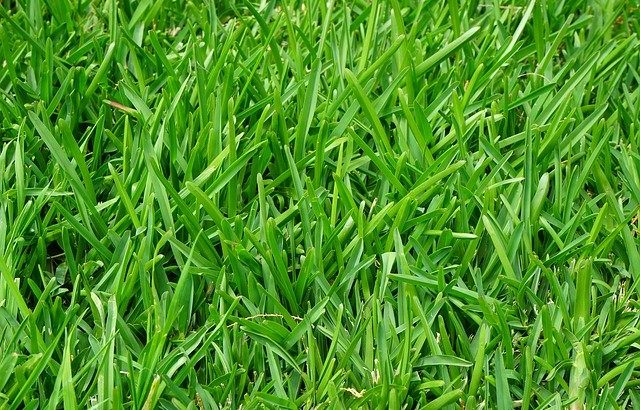 Abaisser le pH de l'herbe – Comment rendre une pelouse plus acide