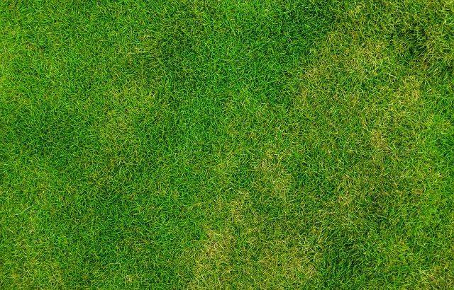 Préparer une pelouse pour l'hiver – En savoir plus sur l'hivernage d'une pelouse