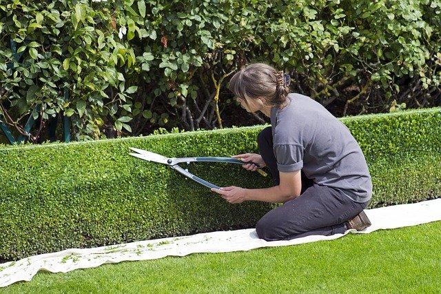 cisaille outil de jardin
