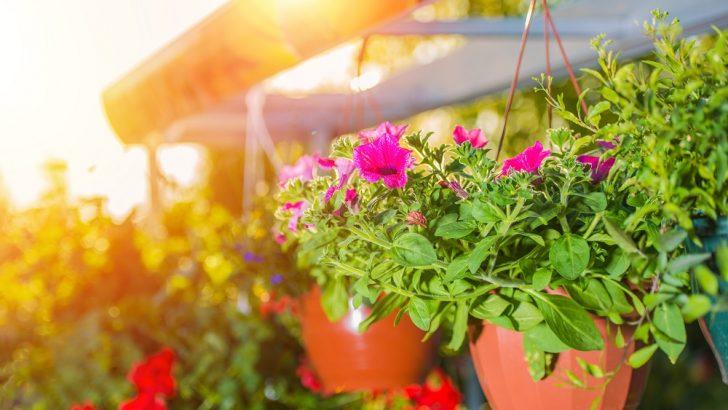 Quelles plantes choisir pour la terrasse?  Un petit tutoriel